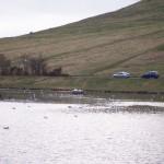 Swans-nest-on-Dunsappie-web