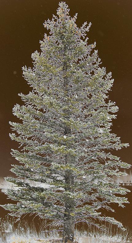 Tree2015Christmas
